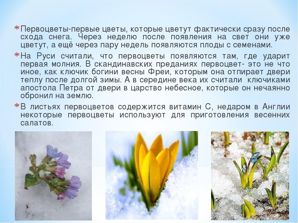 Первоцветы-первые цветы, которые цветут фактически сразу после схода снега. Ч...