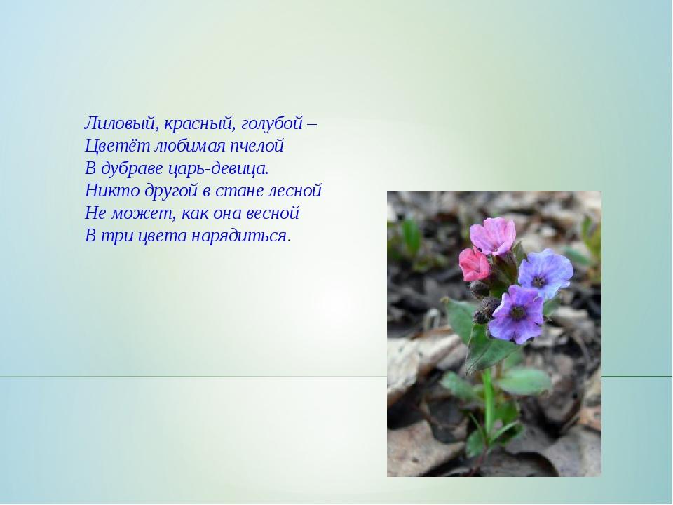 Лиловый, красный, голубой – Цветёт любимая пчелой В дубраве царь-девица. Ник...