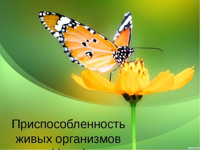 Приспособленность живых организмов (фото)