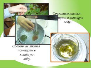 Срезанные листья помещаем в кипящую воду. Срезанные листья помещаем в кипящую