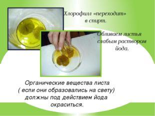 Хлорофилл «переходит» в спирт. Обливаем листья слабым раствором йода. Органич