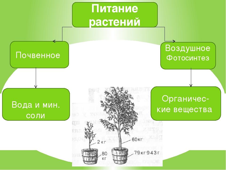 Питание растений Почвенное Воздушное Фотосинтез Вода и мин. соли Органичес- к...