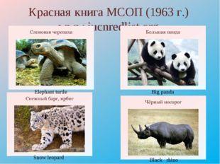 Красная книга МСОП (1963 г.) www.iucnredlist.org Elephant turtle Big panda Sn