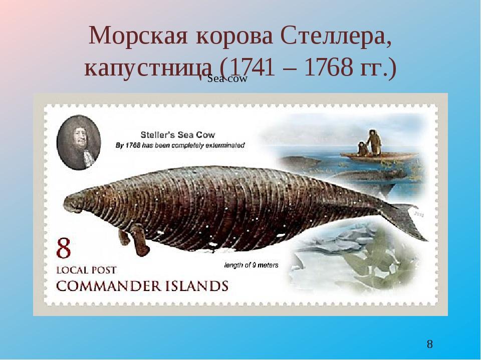 Морская корова Стеллера, капустница (1741 – 1768 гг.) Sea cow http://savepic....