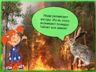 Люди разжигают костры. Из-за этого возникают пожары! Гибнет все живое!