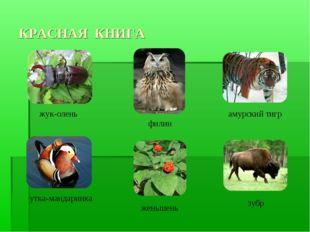 КРАСНАЯ КНИГА жук-олень утка-мандаринка филин амурский тигр женьшень зубр