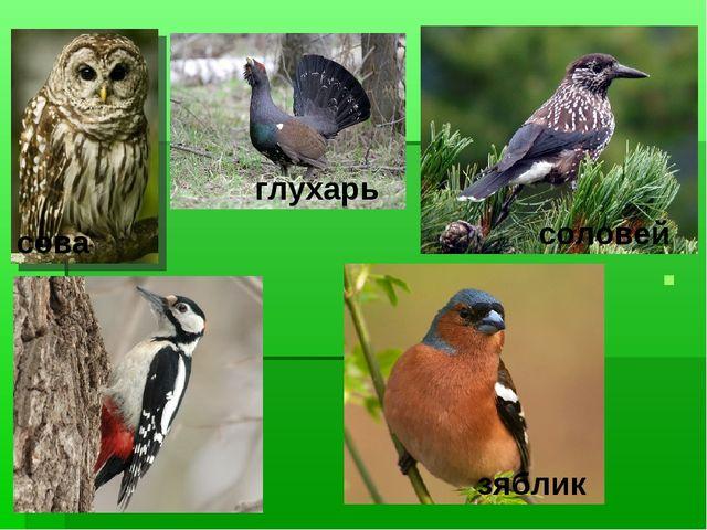 соловей глухарь зяблик сова