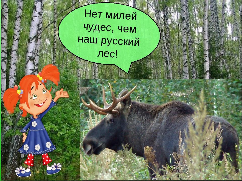 Нет милей чудес, чем наш русский лес!