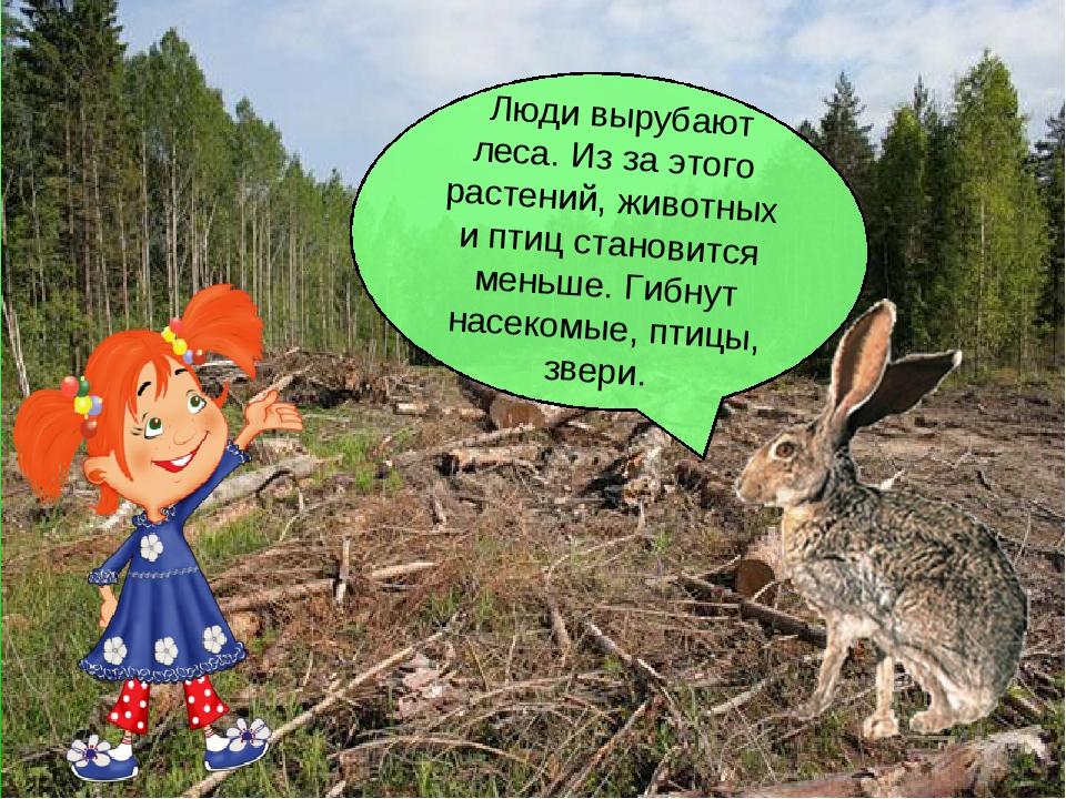 Люди вырубают леса. Из за этого растений, животных и птиц становится меньше....
