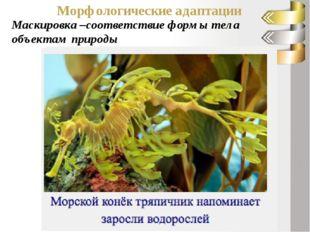 Морфологические адаптации Маскировка –соответствие формы тела объектам природы
