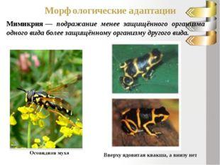 Морфологические адаптации Мимикрия— подражание менее защищённого организма о