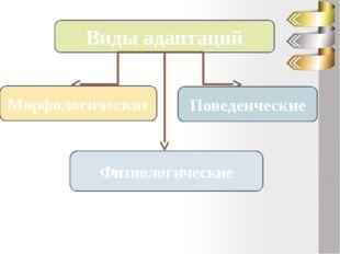 Виды адаптаций Морфологические Физиологические Поведенческие