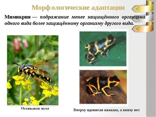 Морфологические адаптации Мимикрия— подражание менее защищённого организма о...