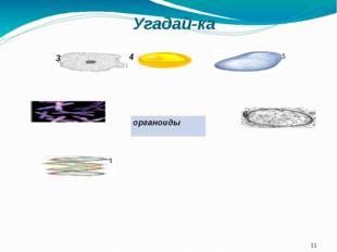 Угадай-ка 3 4 органоиды 5 2 1 6