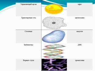 рисунок название Граница плазматическая мембрана Управляющий орган ядро Тран