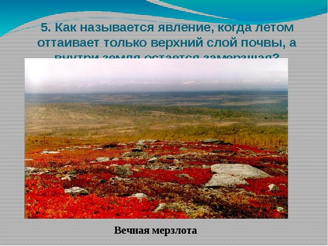 5. Как называется явление, когда летом оттаивает только верхний слой почвы, а...