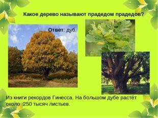 Какое дерево называют прадедом прадедов? Ответ: дуб. Из книги рекордов Гинесс
