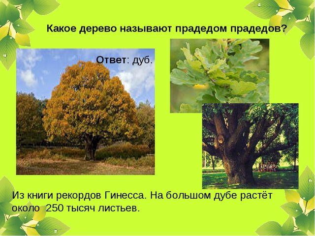 Какое дерево называют прадедом прадедов? Ответ: дуб. Из книги рекордов Гинесс...