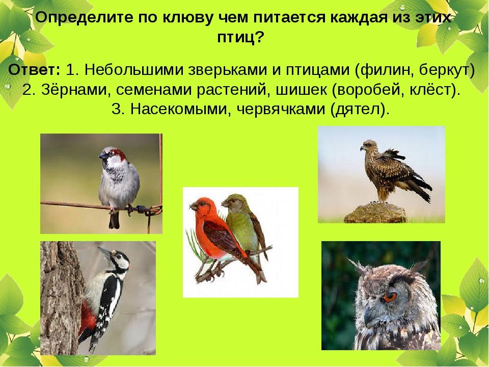 Определите по клюву чем питается каждая из этих птиц? Ответ: 1. Небольшими з...