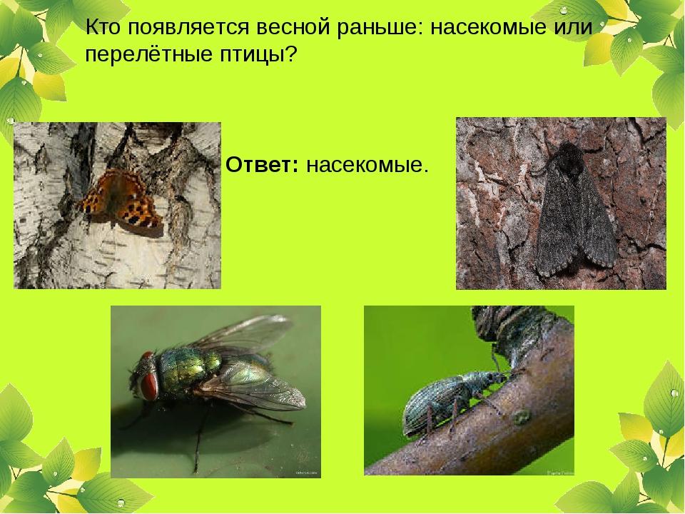 Кто появляется весной раньше: насекомые или перелётные птицы? Ответ: насекомые.
