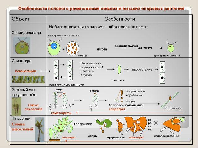 Особенности полового размножения низших и высших споровых растений зигота зим...