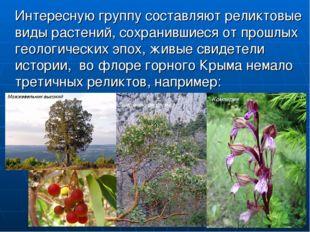 Интересную группу составляют реликтовые виды растений, сохранившиеся от прош