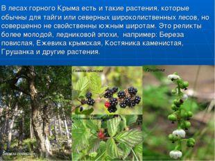 В лесах горного Крыма есть и такие растения, которые обычны для тайги или се