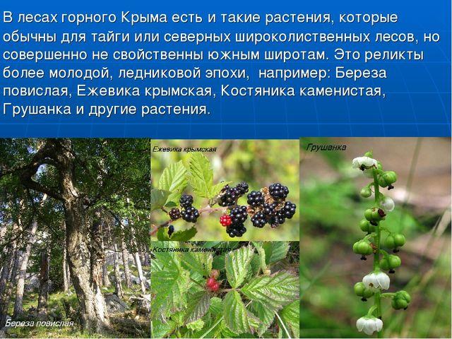 В лесах горного Крыма есть и такие растения, которые обычны для тайги или се...