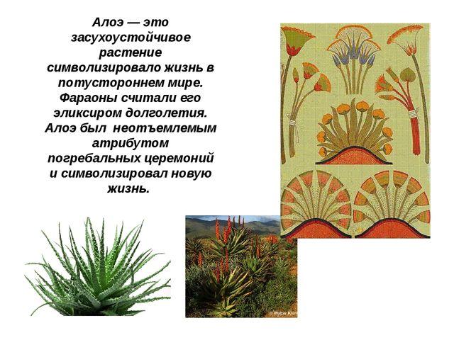 Алоэ — это засухоустойчивое растение символизировало жизнь в потустороннем ми...