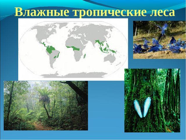 Влажные тропические леса