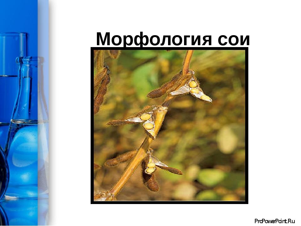 Морфология сои ProPowerPoint.Ru