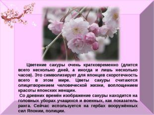 Цветение сакуры очень кратковременно (длится всего несколько дней, а иногда