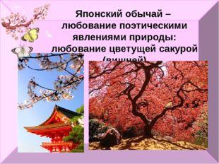 Японский обычай – любование поэтическими явлениями природы: любование цветуще