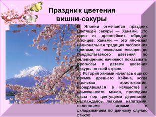 Праздник цветения вишни-сакуры В Японии отмечается праздник цветущей сакуры —