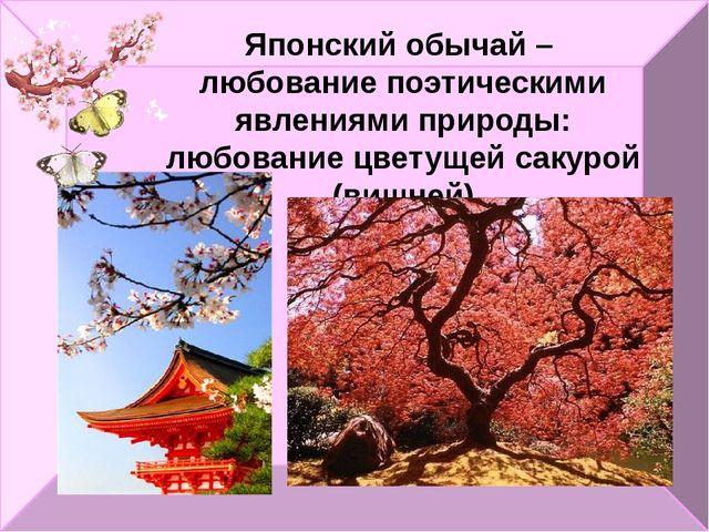 Японский обычай – любование поэтическими явлениями природы: любование цветуще...