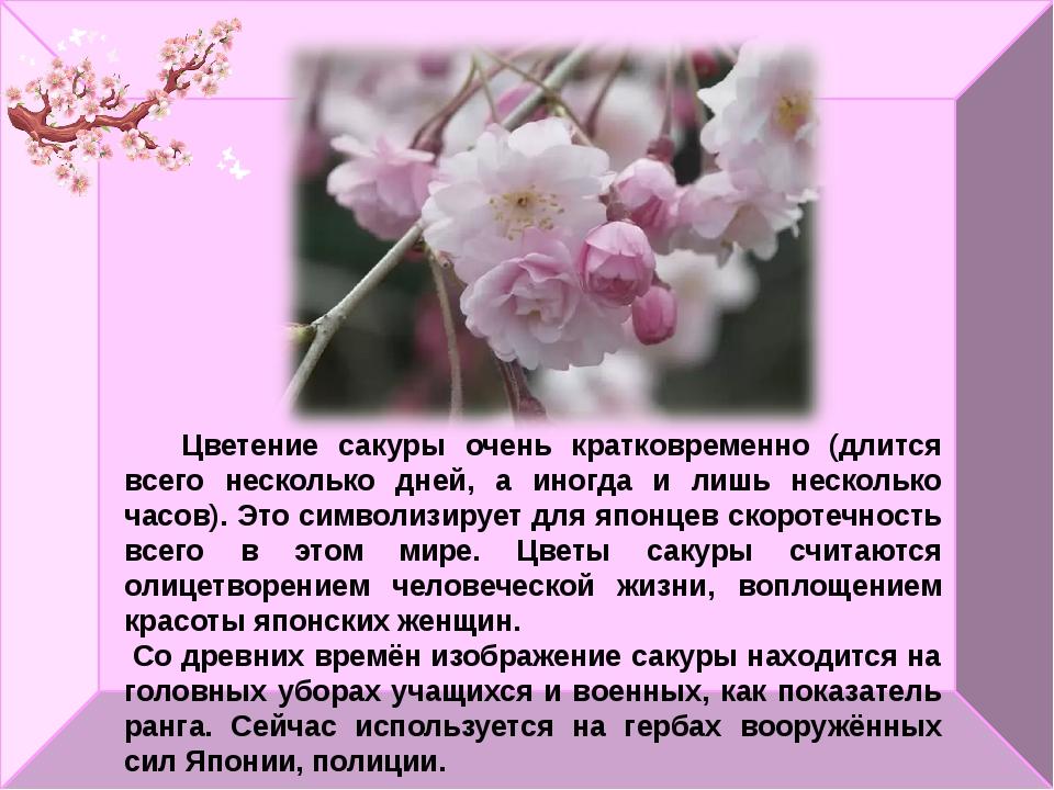 Цветение сакуры очень кратковременно (длится всего несколько дней, а иногда...