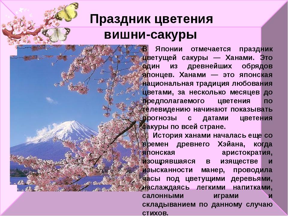 Праздник цветения вишни-сакуры В Японии отмечается праздник цветущей сакуры —...