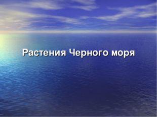Растения Черного моря
