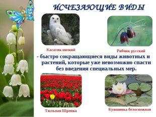 - быстро сокращающиеся виды животных и растений, которые уже невозможно спаст
