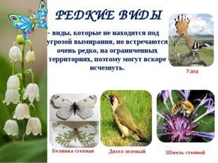 РЕДКИЕ ВИДЫ Белянка степная Шмель степной Дятел зеленый - виды, которые не на