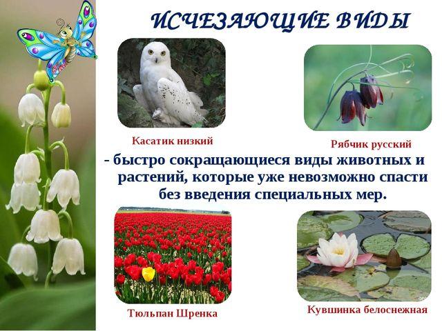 - быстро сокращающиеся виды животных и растений, которые уже невозможно спаст...