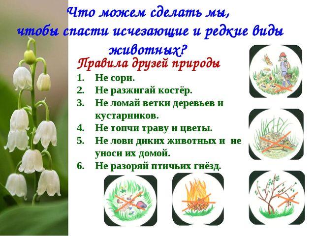 Правила друзей природы Не сори. Не разжигай костёр. Не ломай ветки деревьев и...