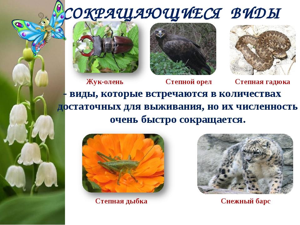 - виды, которые встречаются в количествах достаточных для выживания, но их чи...