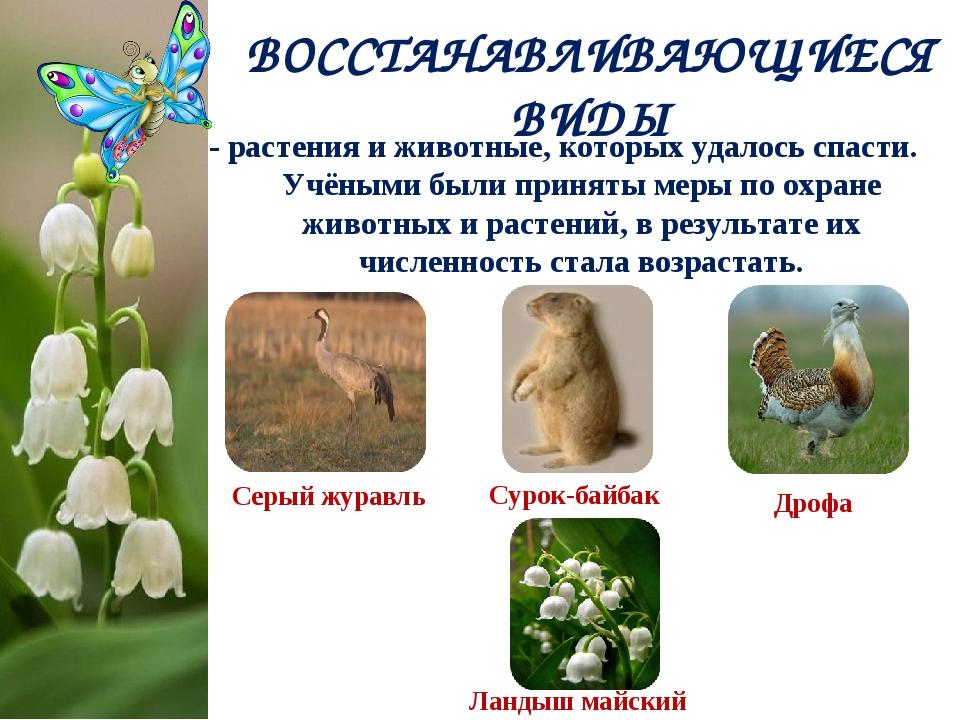 ВОССТАНАВЛИВАЮЩИЕСЯ ВИДЫ - растения и животные, которых удалось спасти. Учёны...