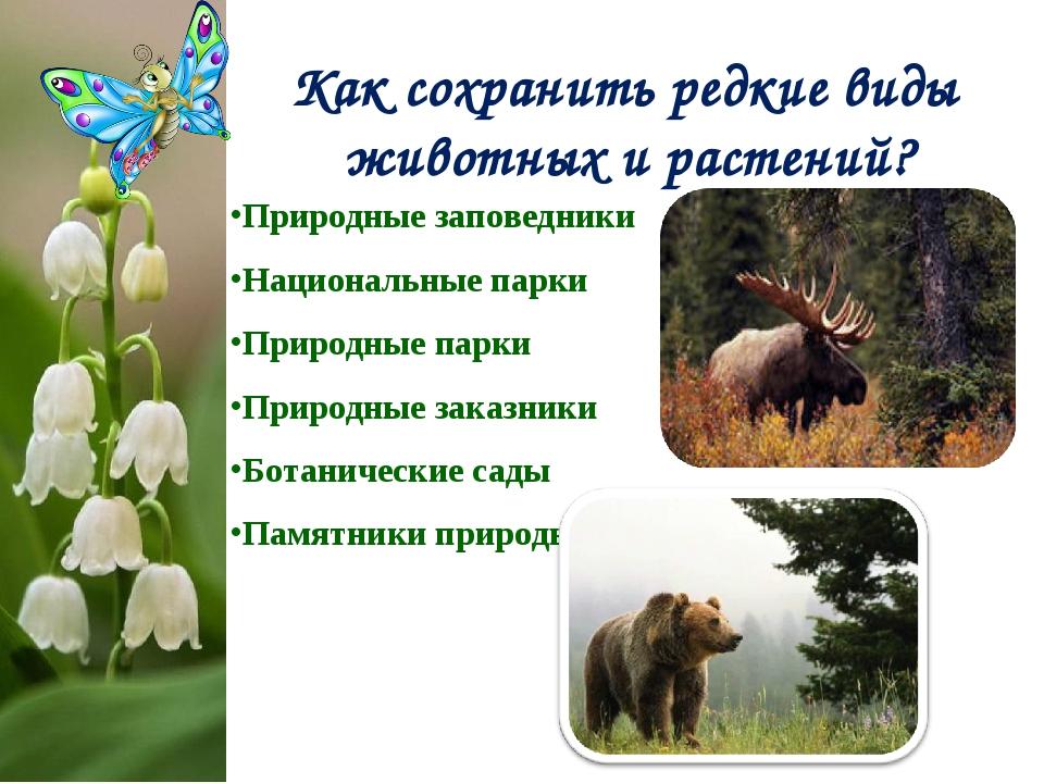 Как сохранить редкие виды животных и растений? Природные заповедники Национал...