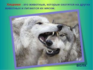 Хищники - это животные, которые охотятся на других животных и питаются их мя