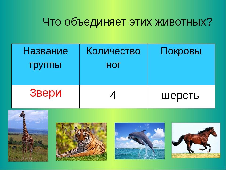 Что объединяет этих животных? 4 шерсть Название группыКоличество ногПокровы...