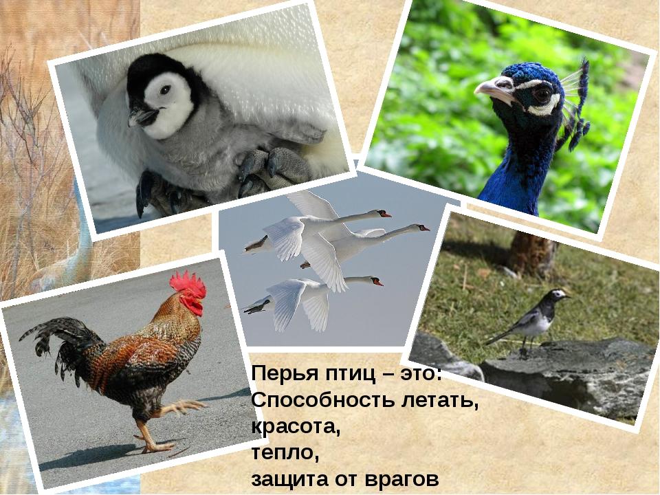 Перья птиц – это: Способность летать, красота, тепло, защита от врагов