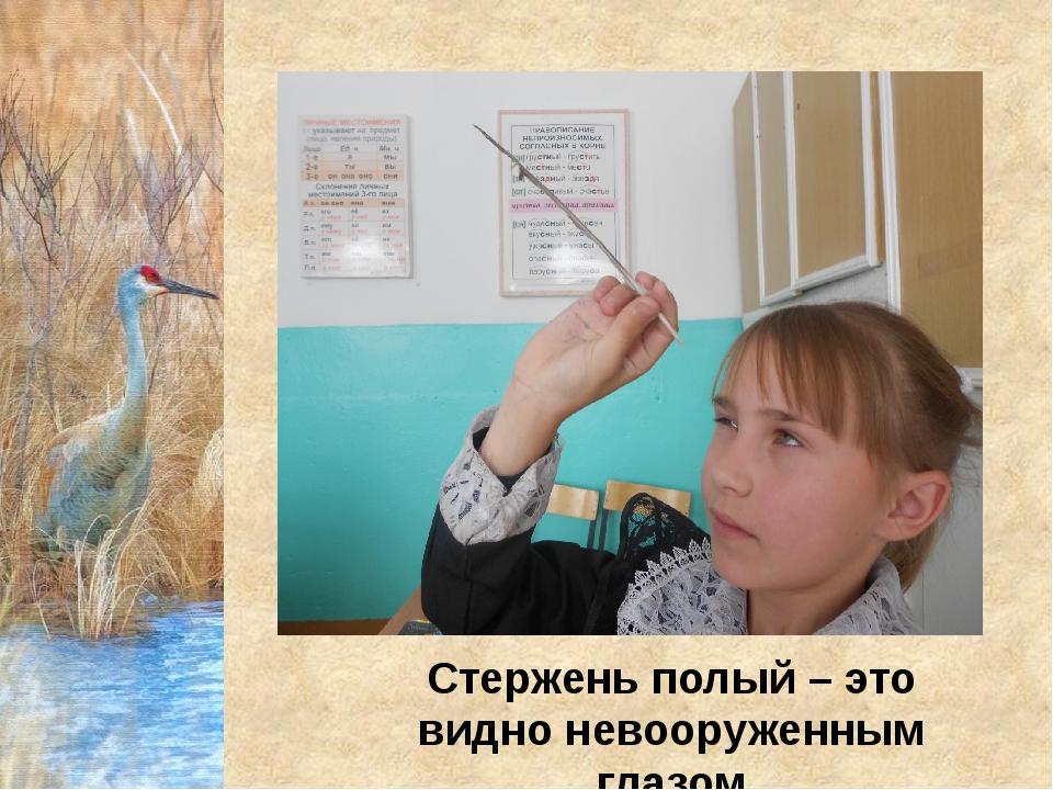 Стержень полый – это видно невооруженным глазом
