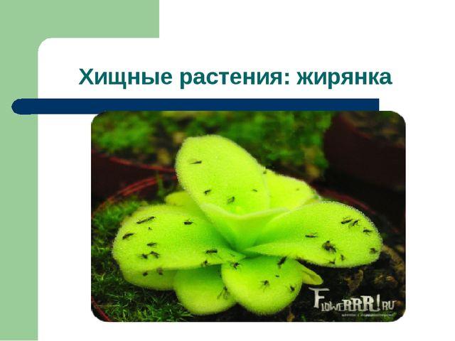 Хищные растения: жирянка